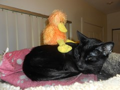 What the Mew ? (Mr. Ducke) Tags: cat kitty humphrey stuffy parsnip