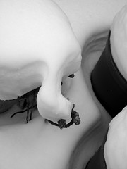 snow turtle (joe.laut (offline for a while)) Tags: bw snow blackwhite turtle sw schwarzweiss mrz 2013 incoloro joelaut