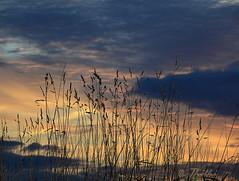 130305 csh 130321  Ththi (thethi (don't like beta groups)) Tags: nature silhouette soleil belgium belgique ciel nuage herbe namur wallonie inthesky provincenamur ruby10 setmorethan15forexplore20