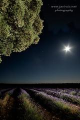 Esperando la siega (javiruiz) Tags: nightphotography naturaleza noche nocturna brihuega lavanda espliego javierruizherrera samyang12 fujixt1 lunamoon lavender