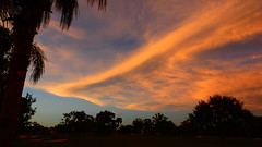 Sunset August 21, 2016 (Jim Mullhaupt) Tags: sunset sundown dusk sun evening endofday sky clouds color red gold orange pink yellow blue tree palm silhouette weather tropical exotic wallpaper landscape nikon coolpix p900 bradenton florida manateecounty jimmullhaupt cloudsstormssunsetssunrises photo flickr geographic picture pictures camera snapshot photography nikoncoolpixp900 nikonp900 coolpixp900 summer weatherphotography