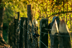 Electric Fence (WR Takiguchi) Tags: fence wood colors wire daylight trees bokeh farm branches countryside lines