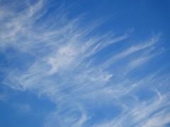 Evening Cirrus (BriarCraft) Tags: cirrus cirrusuncinus cloud sky