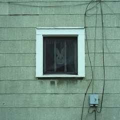 (patrickjoust) Tags: uniontown pennsylvania mamiyac330s sekor80mmf28 kodakportra400 6x6 medium format 120 c41 color negative film manual focus analog mechanical patrick joust patrickjoust usa us united states north america estados unidos autaut bunny rabbit easter green house home window