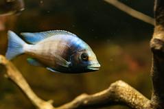 Acuario Agosto 2016 (06) (Fernando Soguero) Tags: acuario zaragoza acuariodezaragoza aragn turismo aquarium nikon d5000 fsoguero fernandosoguero