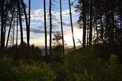Vom Wald in die Ferne 1 (Timo Jng) Tags: nikon d3300 1855 18mm sun sunny sunlight sky blue himmel blau sonnig frhabend evening sunset landscape landschaft ferne beautiful view aussicht lol unbearbeitet natur nature natrlich
