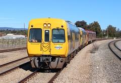 Q051 Islington 28/08/2016 (Dom Quartuccio) Tags: nrm pts 3000 30103014 321400 redhen islington adelaide metro railway trains transfer heritage