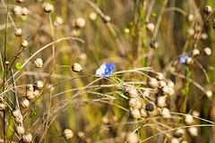 DSC01112.jpg (chagendo) Tags: pflanze makro makrofotografie sonyalpha7ii 90m28g outdoor