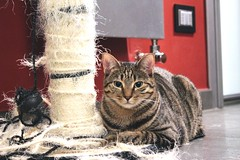The Scratcherslayer (StefoF) Tags: cat gatto tiragraffi scratchingpost gin pet scratcher