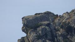 Leone (Sandro Dei) Tags: lion leone rockface