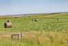 _MG_2177.jpg (nbowmanaz) Tags: saskachewan mossbank saskatchewan canada unitedstates southweststates places stvictor