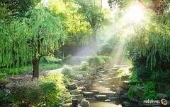 Green Alignment (Andy Brandl (PhotonMix.com)) Tags: park freshness morning trees lushfoliage water creek landscaping sunrays godrays hdr nikon photonmix china