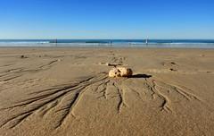 Pebble (tombola007) Tags: pebble rock beach sea ocean sand lines perspective