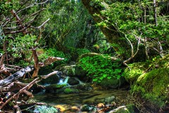 Dreaming of a happy place (cjaraf) Tags: chile parque naturaleza nature water forest river bosque senderismo nahuelbuta