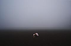 6/52 - 'Sconfitta' (Sara Dell'Antoglietta) Tags: light white cold girl fog project dark dead person sadness back hurt blood nikon sara alone hand fear foggy tired fields lonely afraid sick defeat died tristezza solitudine 52weeks stanchezza sconfitta d3100 dellantoglietta