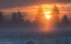 The Day Before Me (c. Melon Images) Tags: new morning winter sun mist tree fog pine sunrise canon landscape dawn glow farm january footprints pines daybreak pinebarrens markiii 2013 whitesbog canon135l 5dmarkiii
