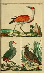 birds naturalhistory ornithology smithsonianinstitutionlibraries earlyworksto1800 taxonomy:binomial=gallinulachloropus taxonomy:binomial=fulicaatra taxonomy:binomial=mycteriaibis bhl:page=39047867 dc:identifier=httpbiodiversitylibraryorgpage39047867 taxonomy:binomial=tantalusibis taxonomy:binomial=fulicachloropus