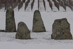 Vier Menhire von Corcelles - prs - Concise ( Findling / Erratier ) im Winter mit Schnee / Snow in Corcelles - prs - Concise am U.fer des N.euenburgersee im Kanton Waadt / Vaudt in der Schweiz (chrchr_75) Tags: ice stone schweiz switzerland suisse suiza pierre swiss age sua era christoph svizzera pietra stein kivi pedra sveits januar steen findling glacial sviss priode poca zwitserland sveitsi hinkelstein perodo menhir 1301 suissa erratic istid glaciale kanton chrigu waadt szwajcaria eiszeit   2013 ijstijd erratiker glaciaire epoka chrchr irregolare erratique jkausi hurni vaudt chrchr75  chriguhurni hnenstein errtico hhnerstein kantonwaadt istiden lodowcowa kantonvaudt albumerratikerderschweiz chriguhurnibluemailch arvaamaton reikull  uberegnelig oberkneligt albummenhirederschweiz