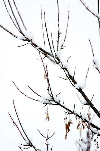 snowtree1
