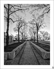 Pasaje de rboles I / Passage of trees I (A. Jimnez) Tags: madrid b trees bw espaa alex j arboles camino bn pasillo belmonte albacete hierba aranjuez pasaje jimenez a trayo