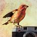Camera Finch