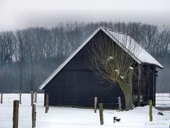 Rural garage (joeke pieters) Tags: snow holland tree netherlands barn rural fence garage sneeuw shed nederland boom achterhoek snowscape winterswijk hek gelderland schuur landelijk gelderschlandschap woold panasonicdmcfz150 1050103