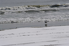 Avalon NJ beach on a winter's afternoon (blind squirrel snapography) Tags: ocean winter snow beach newjersey pentax jerseyshore avalon southernnewjersey k20d