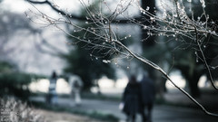 hear footsteps of ... (sn0pan) Tags: winter people cold japan iso100 tokyo spring dof bokeh f4 200mm 1125sec canonef70200mmf28lisiiusm canoneos1dx