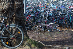 bike salad (Winfried Veil) Tags: leica bike bicycle germany circle deutschland 50mm rad bikes rangefinder bicycles round parkplatz rund summilux asph fahrrad gttingen tyre fahrrder m9 kreis niedersachsen lowersaxony 2011 messsucher mobilew leicam9 winfriedveil
