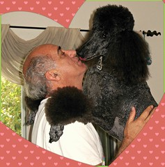 My Funny Valentines.........Explore (Midnight and me) Tags: love kiss ben explore hubby valentinesday standardpoodle thegalaxy myfunnyvalentines blackstandardpoodle midnightandme