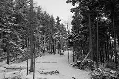 Deer crossing (Brandon712) Tags: snow canon snowshoe outside wv westvirginia 24105l canon5dmark2 5d2 5dmark2