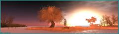 Coucher de soleil ... (Tim Deschanel) Tags: life sun landscape soleil tim sl second wendy paysage exploration arbre humanoid deschanel xeno gilmour