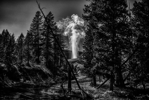 Geyser - Yellowstone National Park