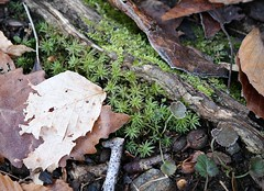 "Moss & a little frost • <a style=""font-size:0.8em;"" href=""http://www.flickr.com/photos/92887964@N02/8516203956/"" target=""_blank"">View on Flickr</a>"