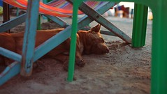 Sleeping Stray Dog (andersdenkend) Tags: city sleeping sunset dog cinema beach thailand sand dof chairs bokeh widescreen chillin depthoffield chilling hund thai stray cinematic 169 pattaya prowler chillax liegen streuner cinematique fujinonxf35mmf14 fujifilmxe1