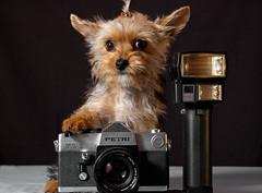 La fotografa (Nenad Ivanovic) Tags: dog dogs animals cane nikond50 perros animales psi pas petri zivotinje nemanja camarafotografica nenadivanovic glicani