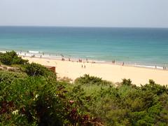 Una playa de 5 estrellas una maana de viento. (margabel2010) Tags: flora cadiz playas costas cieloytierra marycielo paisajescosteros paisajesmartimos floracostera costasmartimas