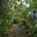 Sentiero nel parco nazionale Tortuguero a pochi passi dalla spiaggia