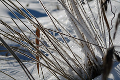Hrmatis rohukrtel (Jaan Keinaste) Tags: winter snow nature frost estonia pentax lumi eesti loodus talv k7 hrmatis pentaxk7