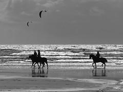 Erdeven (camaroem56) Tags: mer vent bretagne armor plage morbihan chevaux vagure