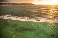Lap Pool - Bondi 2013 (Paul Amestoy) Tags: ocean morning sea summer reflection beach pool bondi rain swim sunrise canon healthy exercise pacific south sydney wave australia lap swimmers flippers fit laps bondiicebergs oceanpool benbuckler lappool 5dmklll