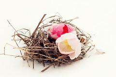 Freshly hatched (bratli) Tags: elementsorganizer