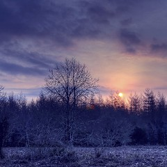 Cold sun (Eric Goncalves) Tags: trees light sun cold color nature forest sunrise landscape gloucestershire forestofdean nikond7000