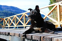 trescuarto perfil ;) (Alita García) Tags: dog perro callejero negro black perfil posando cerco baranda madera wood monaña paisaje landscape primerplano atento