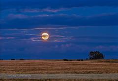 "The Rising ""Sturgeon"" Moon (Amazing Sky Photography) Tags: fullmoon sturgeonmoon prairie wheatfield luminosity hdr rising august alberta canada"