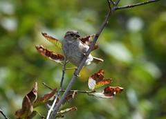 (careth@2012) Tags: wildlife nature beak branch branches