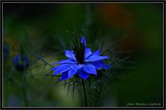 :) (dariusz_lipinski) Tags: flowers beauty nature