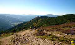 Koz hbety: Stezka (FeetNoBorders) Tags: krkonose giant mountains panorama wide warm way trip koz hbety hill