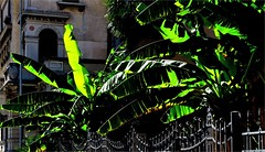 Street Lights (Konny D.) Tags: palms palmen palma streetlights streetscene strase strada green palme palmas calle wroughtiron fence gitterzaun