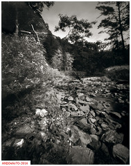 Along the Burke (DelioTO) Tags: 4x5 aph09 autaut blackwhite canada f250 june landscape natparks ontario panx64 pinhole rural summer toned trails woods